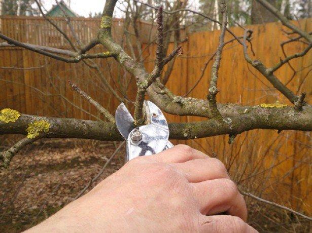 Цели обрезки дерева