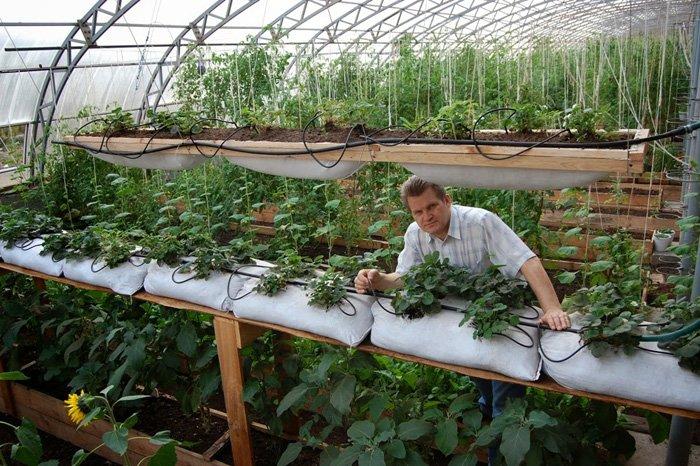 Выращивание на искусственном освещении 984