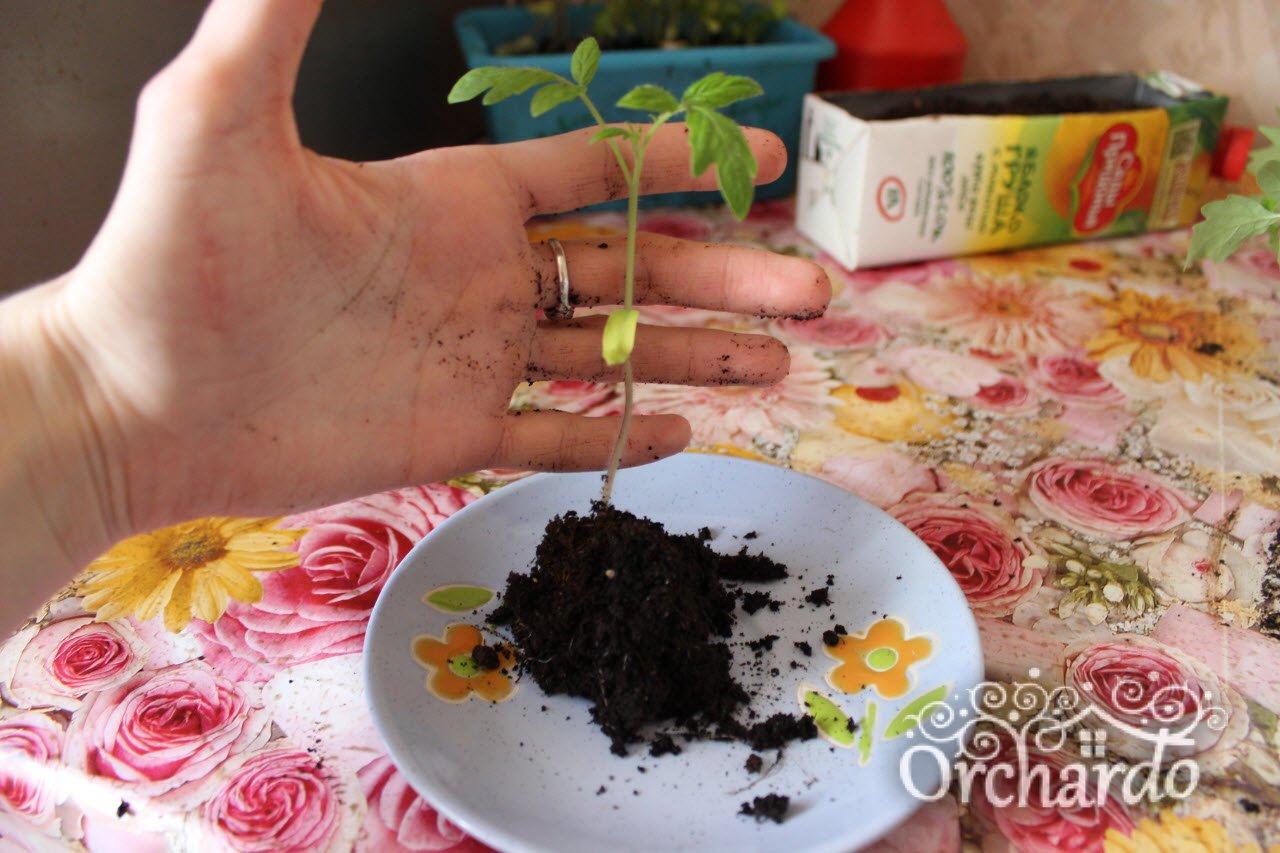 Как в домашних условиях заготовить семена огурцов