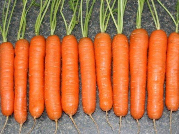 На фото Нантская морковь