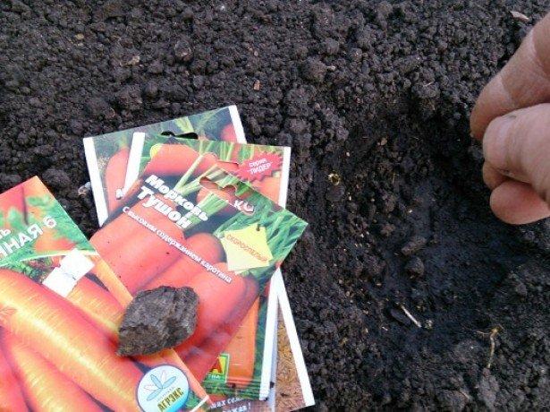 Фото посадки моркови