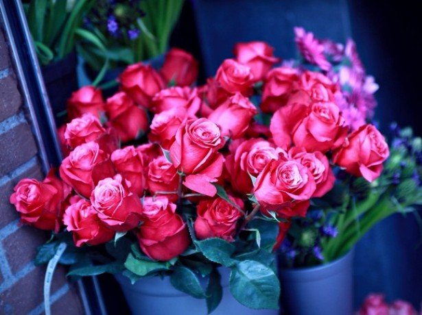 На фото розы