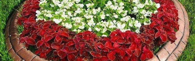 Как упорядочить буйство цветов – грамотная планировка клумбы