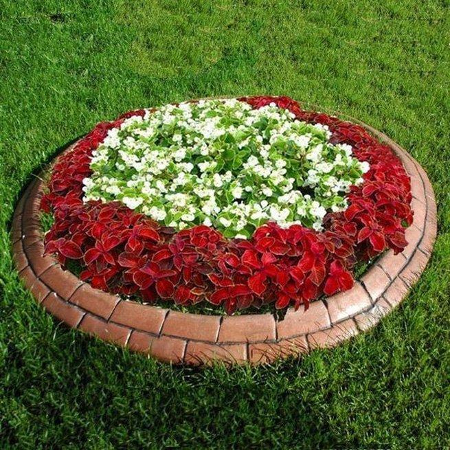 Схема как посадить цветы 120