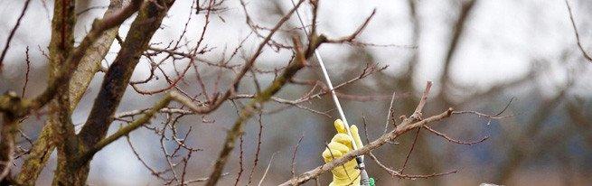 Осенняя обработка яблонь – подготавливаем яблоневый сад к зиме
