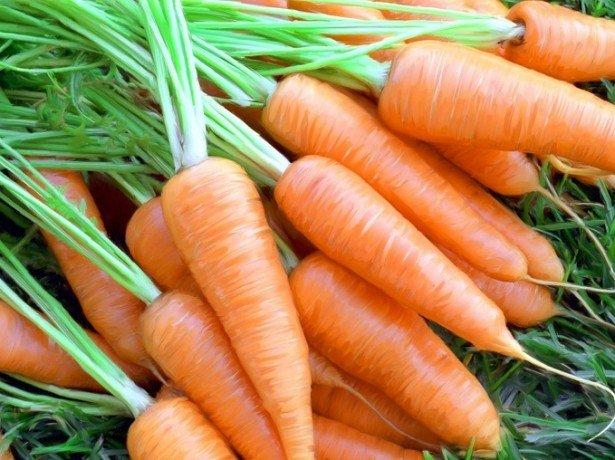Вся сила в моркови фото