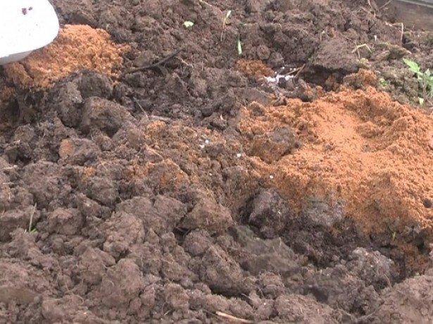 На фото подготовка почвы перед посадкой клубники