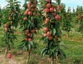 Фото яблонь