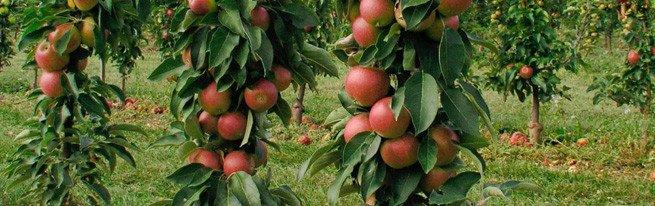 Расширяем яблоневый сад – все об осенней посадке яблонь