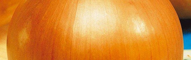 Репчатый лук, выращенный из чернушки, - рассадой, весенним и подзимним посевом