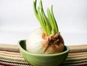 Фото зеленого лука