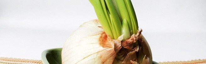 Свежий зеленый лук на вашем окне – как вырастить лук в домашних условиях