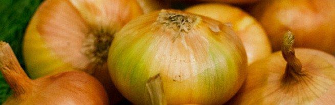 В чем польза репчатого лука, и как его выращивать
