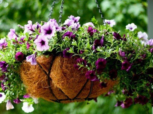 Как вырастить рассаду петунии из семян в домашних условиях В