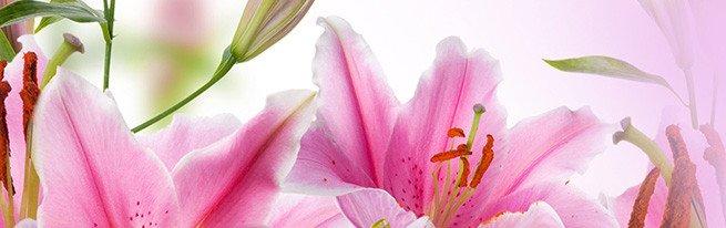 Как правильно посадить лилии: