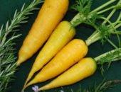 На фото сбор моркови