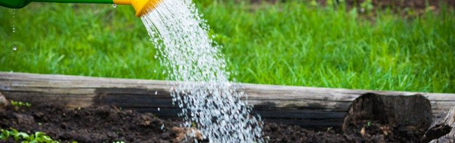 Организовать полив огорода своими руками несложно, главное – знать, как часто поливать огород!