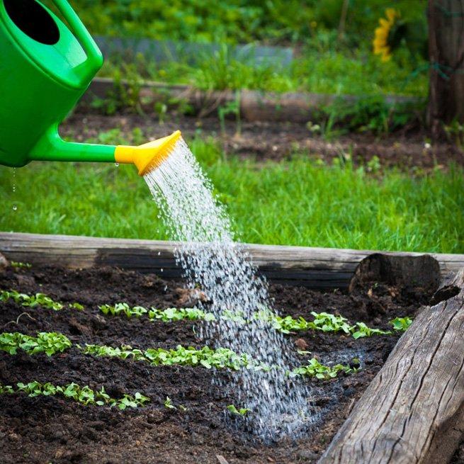 Фото полива огорода