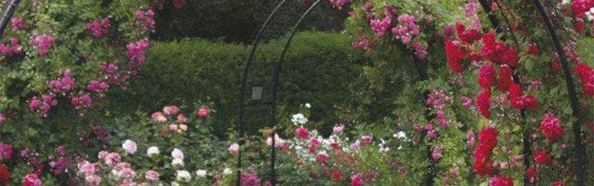 Сочетания растений и цветов на клумбе по форме, цвету и другим характеристикам
