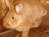 Фото кролика