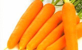 Технологии уборки моркови: как удобнее собирать урожай морковки?