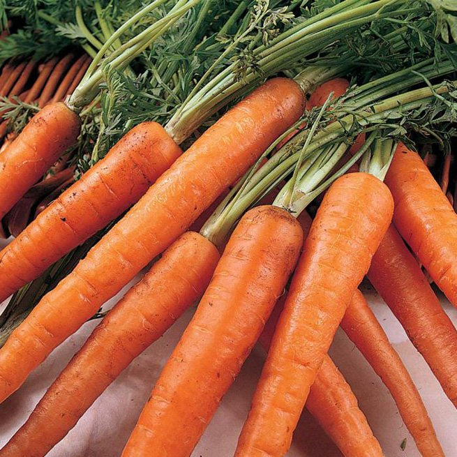 Фотография моркови