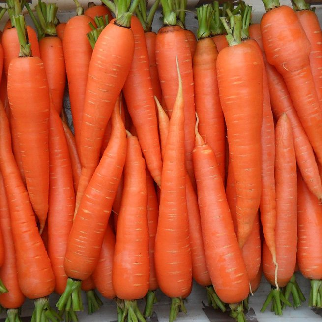 Какие витамины содержит морковь и на что они влияют