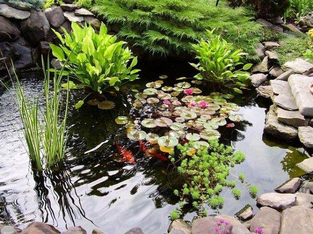 Фото водяных лилий в саду