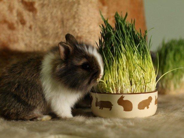 На фото карликовый кролик