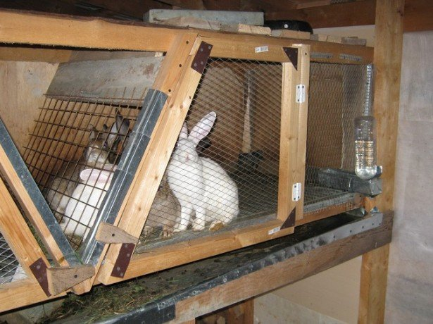 Чертежи бункерной кормушки для кроликов  видео 35