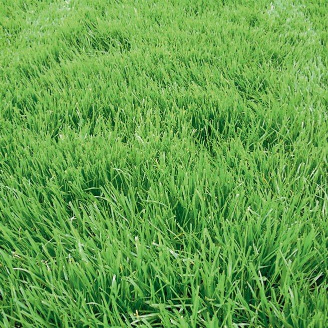 На фото газон