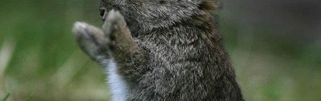 Кролиководство как вариант выгодного бизнеса в домашних условиях