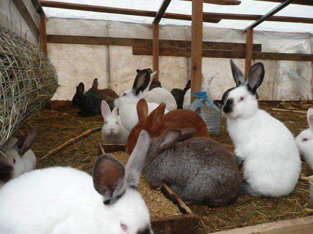 Фото кроликов