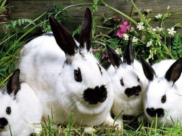 На фотографии кролики