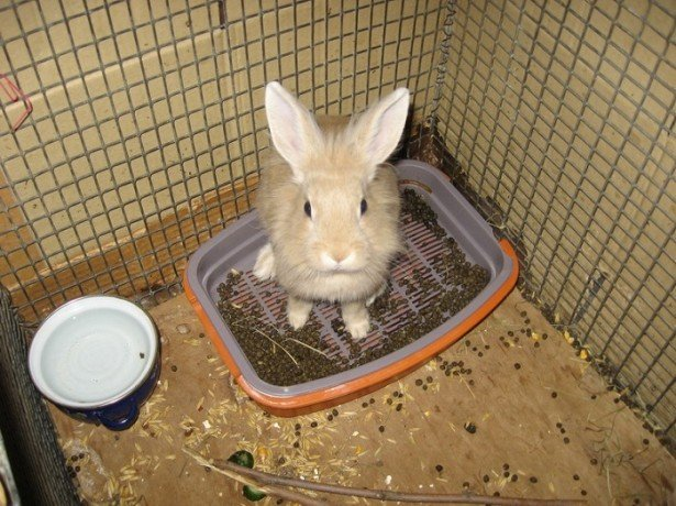 На фото кролик в лотке
