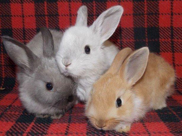 кролик схема декоративный