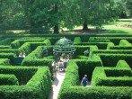 Живая изгородь из туи и ели: как посадить и как ухаживать