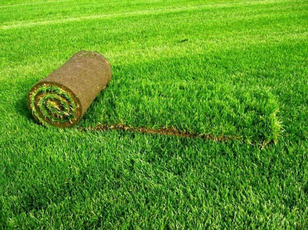 Фото травы в рулоне