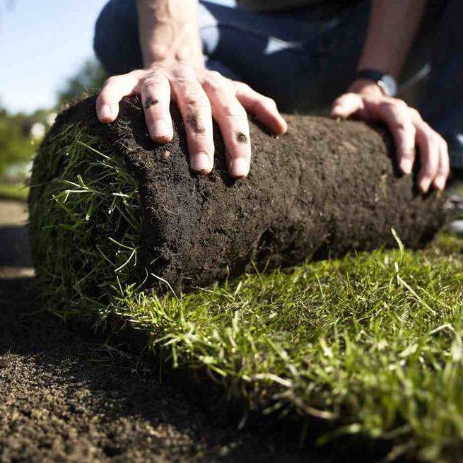 На фото газонная трава в рулоне