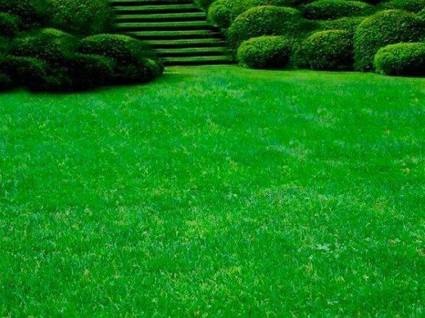 На фотографии газон