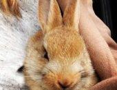 Фото крольчихи