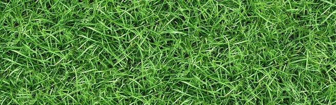 Как правильно сделать газон без помощи специалистов