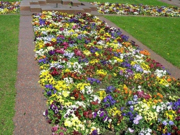 На фото цветочный газон