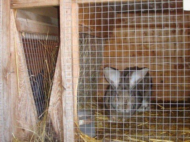 Фотография кролика в клетке
