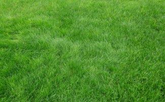 Когда сажать газонную траву, и как добиться наилучшей всхожести газона