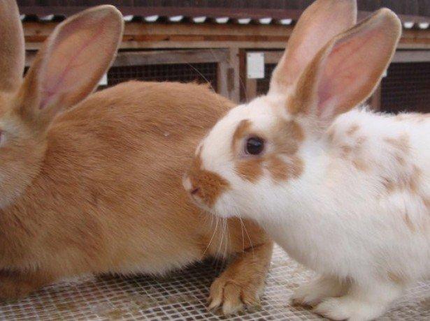 Фотография кроликов