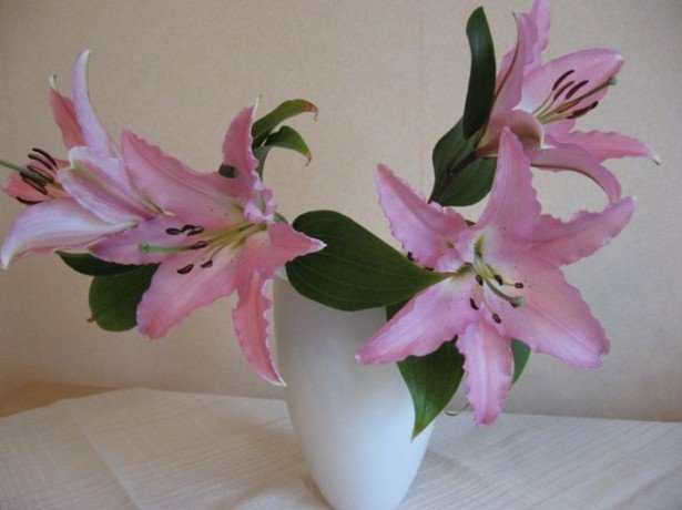 На фотографии лилии