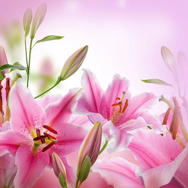 После цветения лилии можно обрезать