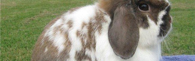Лучшие породы кроликов для разведения в домашних условиях