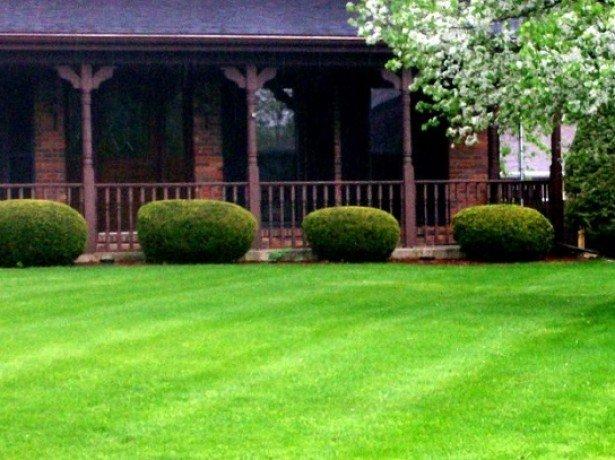 На фото сеянный газон